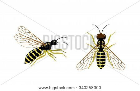 Wasp Icons Set. Set Of Hornet Or Wasp Vector Icons For Web Design. Wasp Insect Vector Color Drawing