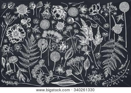 Vector Set Of Hand Drawn Chalk Shepherds Purse, Heather, Fern, Wild Garlic, Clover, Globethistle, Ge