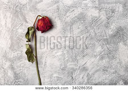 Lonely Wilted Red Rose On A Gray Stone Background. Dead Flower On A Textural Background Top View. Bl