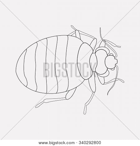 Bedbug Icon Line Element. Vector Illustration Of Bedbug Icon Line Isolated On Clean Background For Y