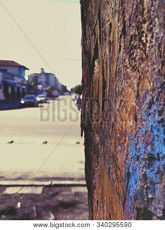 Macro De Um Tronco De árvore Numa Rua