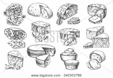 Cheese Sketch Whole And Slices Sorts, Vector Isolated Pencil Hand Drawn Icons. Gourmet Dairy Milk Fo