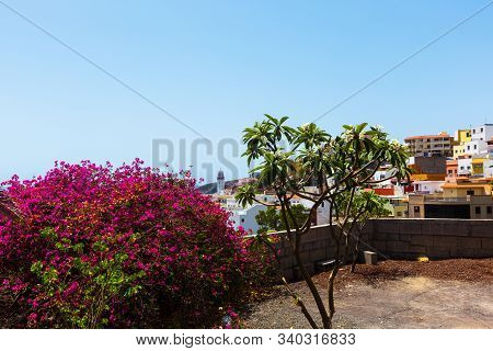 Bell Tower Of Basilica Of Candelaria Through A Blooming Oleander And Medlar