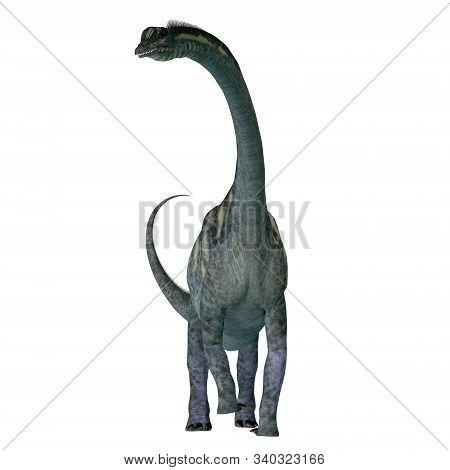 Sauroposeidon Dinosaur Front 3d Illustration - Sauroposeidon Was A Sauropod Herbivorous Dinosaur Tha
