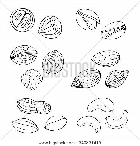 Nuts Hand Drawn Set. Hazelnut, Cashew, Pistachio, Filbert Sketch. Vector Illustration.