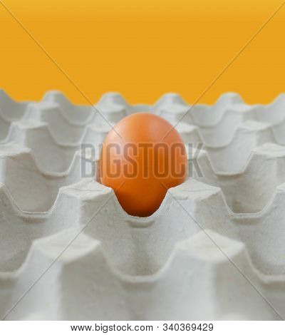 Concept Outstanding Object, Notable Alone Fresh Brown Chicken Egg Left In Paper Tray Pit Pattern Bac