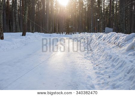 Snowstorm In Park, Winter Landscape.beautiful Winter Scenery With Forest Full Of Trees Covered Snow.