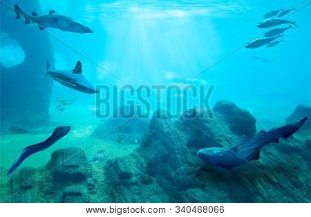 Ocean underwater with marine animals. Rocky seabed. Hunting sharks. Ecosystem. Life in tropical waters.