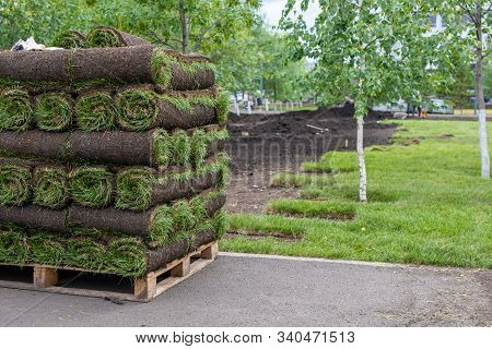 Landscaping, Laying New Sod In Park. Natural Grass Lawn Installation