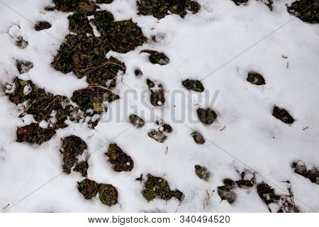 Woodland And Forest Ground Covered With Layer Of Snow. Close Up. Part Of Winter Snow In Field. White