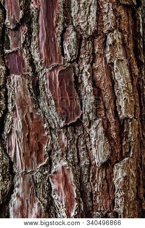 Texture Of Old Wrinkled Leathery Wood. The Tree Bark Is Damaged By Green Moss Bushes. Floral Two-ton