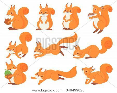 Cartoon Squirrel. Cute Squirrels With Red Furry Tail, Mammals Animals And Brown Fur Squirrel Vector