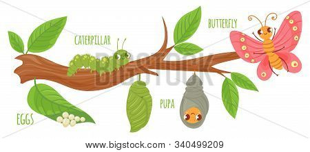 Cartoon Butterfly Life Cycle. Caterpillar Transformation, Butterflies Eggs, Caterpillars And Pupa. I