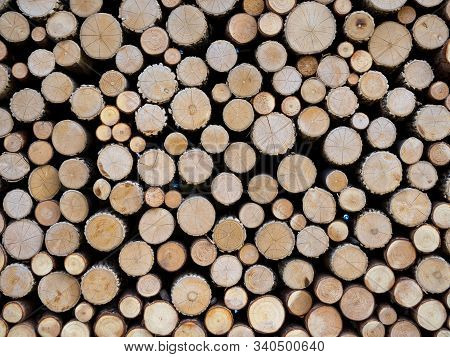 Thin Logs Made Of Wood Trunks Stacked In A Woodpile