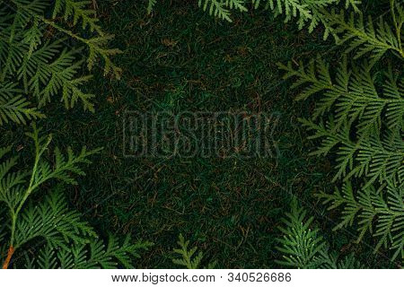 Green Background Made Of Natural Materials Moss And Branches