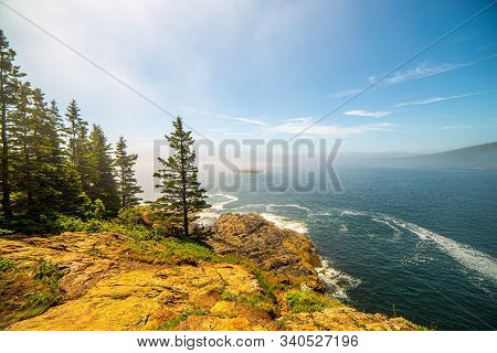 Tall Pines And Foggy View Along Rocky Banks In Acadia National Park, Maine, Usa