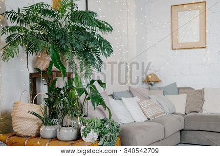 Cozy Living Room Interior With Garland Lights, Fresh And Green Plants In Flowerpots, Comfort Couch A