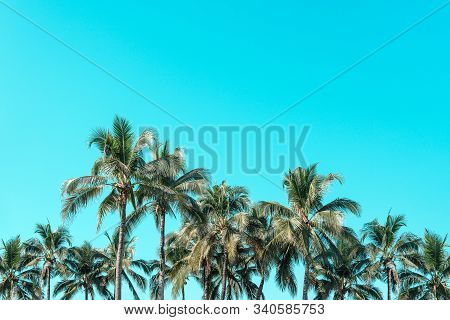 Beautiful Coconut Palm Trees With Vintage Nature Beach Background.