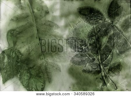 Ecoprint Leaves. Imprint Of A Real Plant On Paper. Vintage Background.