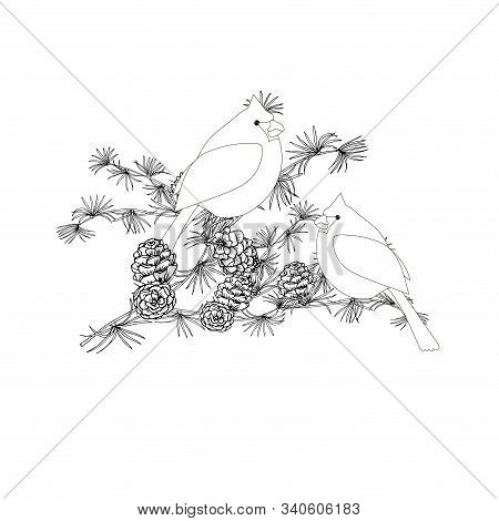 Cardinal On Larch Monochrome Art Design Elements Stock Vector Illustration For Web, For Print, For C