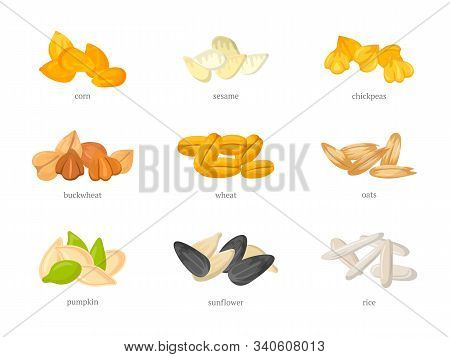 Cereal Grains Flat Vector Illustrations Set. Corn, Sesame And Chickpeas. Various Agricultural Specie