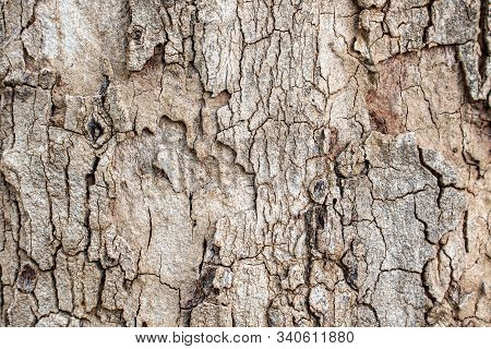 Surface Bark Texture Close Up As A Background