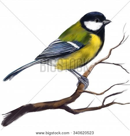 Bird Titmouse On A Branch, Art Illustration Painted With Watercolors Isolated On White Background