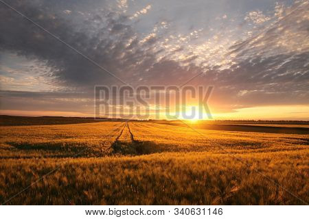 Spring sunrise field grain landscape sun morning sunrise sunset Nature background spring clouds Nature background Nature background travel Nature background Nature background Nature background cloud field sun countryside Nature background Nature dawn day.