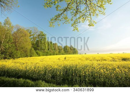 Spring landscape morning sunrise sunset trees Nature background Spring yellow field blooms flowers Nature background Nature background travel Nature background spring Nature background Nature trees Nature background Rape field rapeseed Nature background.