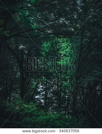Moody Shot In The Forrest In Iran