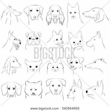 Vector Outline Images Of Dogs Of Different Breeds: Collie, Corgi, Doberman, Scottish Terrier, Jack R