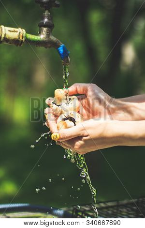 A Handful Of Forest Mushrooms In The Woman Hands