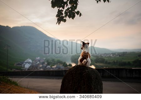 The Dog On The Bench Sits And Looks At The View. Landscape With Pet. Jack Russell Terrier On Top Of