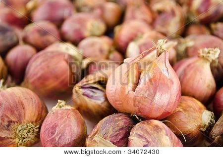 Pile Of Shallots  Isolated On White Background