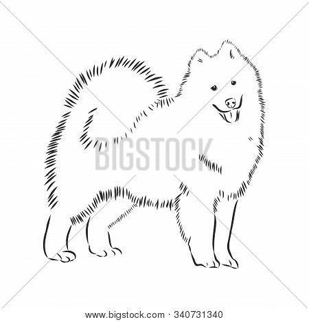 Samoyed Dog Breed Vector Illustration From The Dog Show Sign Symbol Set. Working Dogs Breed From Sib
