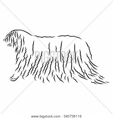 The Komondor , Also Known As The Hungarian Sheepdog, Is A Large, White-coloured Hungarian Breed Of L