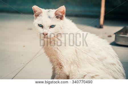 Cat Pound. Close-up Shot Of Homeless Stray Cat Living In The Animal Shelter. Shelter For Animals Con