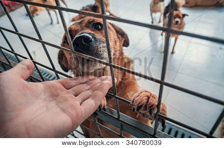 Close-up Of Male Hand Petting Caged Stray Dog In Pet Shelter. People, Animals, Volunteering And Help