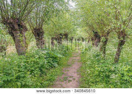 Sandy Path In The Dutch National Park Biesbosch