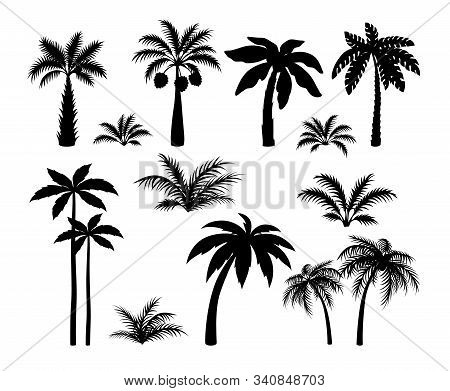 Silhouette Palm Trees. Set Tropical Black Jungle Plants Illustration. Vector Isolated Image Silhouet
