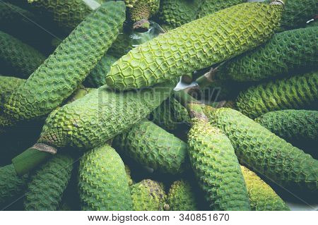 Monstera Deliciosa A Mix Of Pineapple And Banana