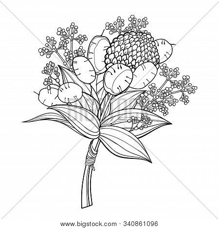 Vector Boutonniere With Outline Lunaria Or Honesty Or Moonwort Dried Flower And Leaf In Black Isolat