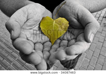 Heart-shaped leaf cupped in hands