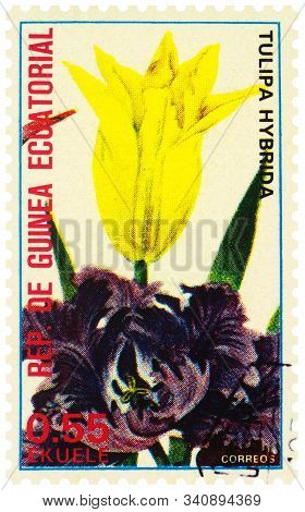 Moscow, Russia - December 20, 2019: Stamp Printed In Equatorial Guinea Shows Yellow Tulip Flower (tu
