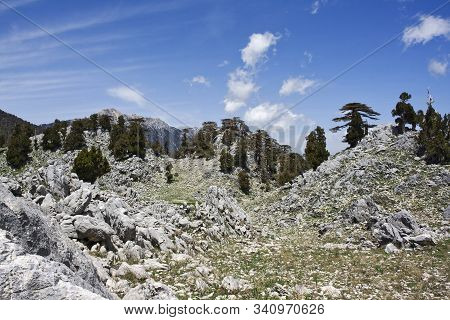 Scenic Mountain Landscape. Stone Valley. Relict Forest Of Lebanon Cedar. Saddle Between The Mountain