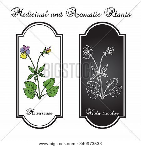 Heartsease Viola Tricolor , Or Johnny Jump Up, Heart S Delight, Tickle-my-fancy, Three Faces In A Ho