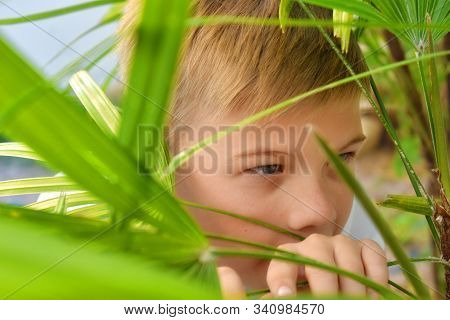 A Child Spies In The Bushes. Children Play Hide And Seek Outdoor. Cheerful Happy Childhood. Hide And
