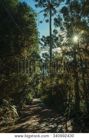 Dirt Pathway Passing Through Wooded Landscape And Sunlight In Aparados Da Serra National Park, Near