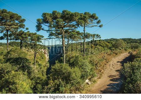 Dirt Pathway At The Itaimbezinho Canyon With Steep Rocky Cliffs And Lush Forest With Pine Trees Near
