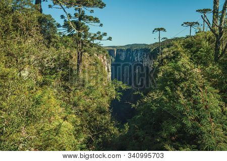 Itaimbezinho Canyon With Steep Rocky Cliffs In A Flat Plateau Covered By Forest And Pine Trees Near